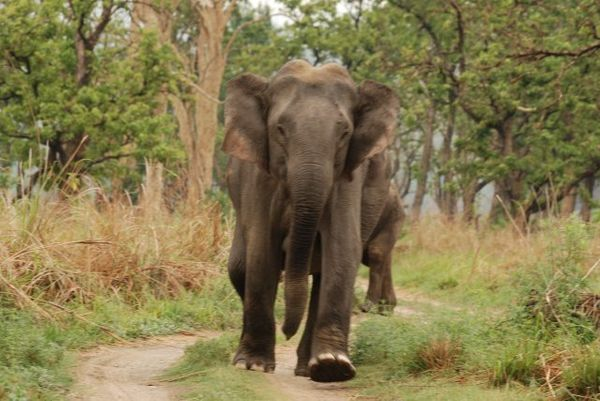 This method was commonly used for many centuries in South and Southeast Asia, where an elephant would crush and dismember con