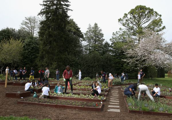 First lady Michelle Obama and local students plant vegetables in the White House kitchen garden.