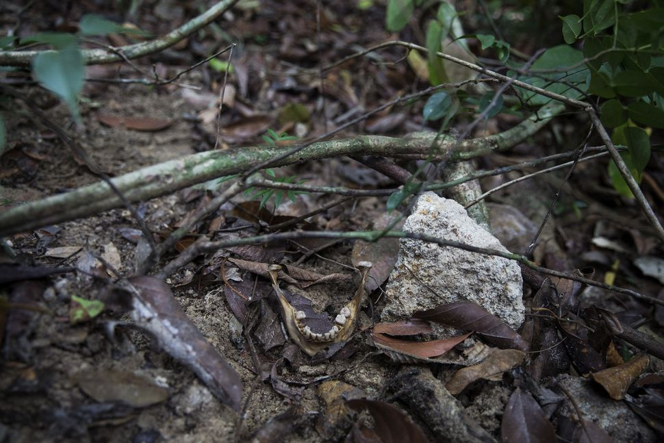 Human bones are seen near abandoned human trafficking camp in the jungle close the Thailand border at Bukit Wang Burma in nor