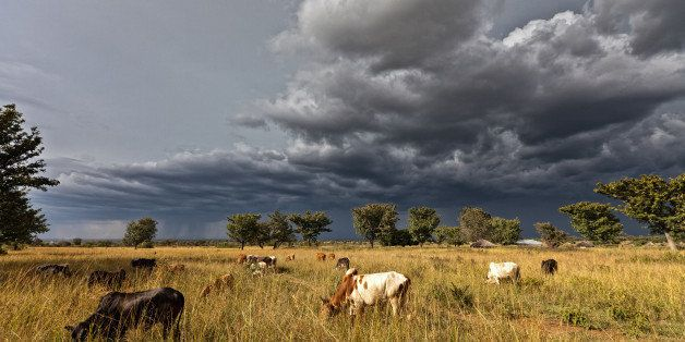 These are some of the super chill cows from the village of Oditel. There is also an oncoming storm. I remember that the momen