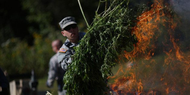 A Kentucky National Guardsmen throws a bushel of illegal marijuana plants seized by the Kentucky State Police Cannabis Suppre
