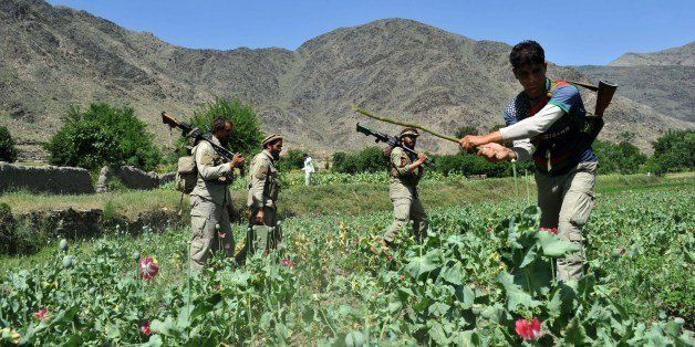 Afghan security force members destroy an illegal poppy crop in the Noor Gal district of eastern Kunar province on April 29, 2