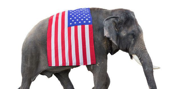 elephant carries a flag USA,  isolated on white background