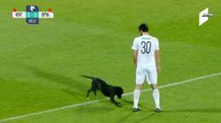 Hund rennt aufs Fußballfeld – die nächsten Minuten sind das Highlight des