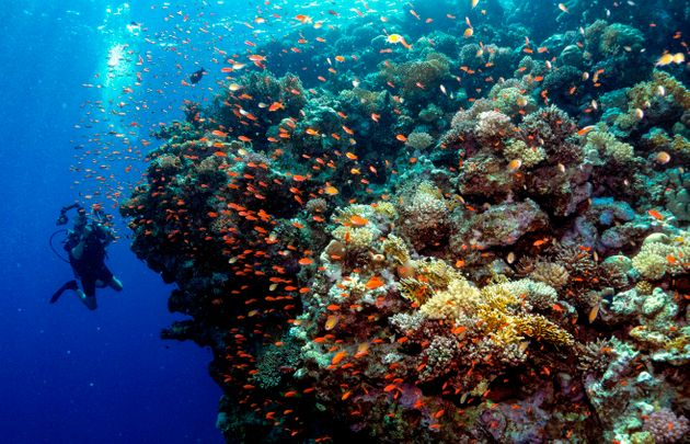 A diver photographs a coral reef in Egypt's Ras Mohammed marine reserve, off the southern tip of the...