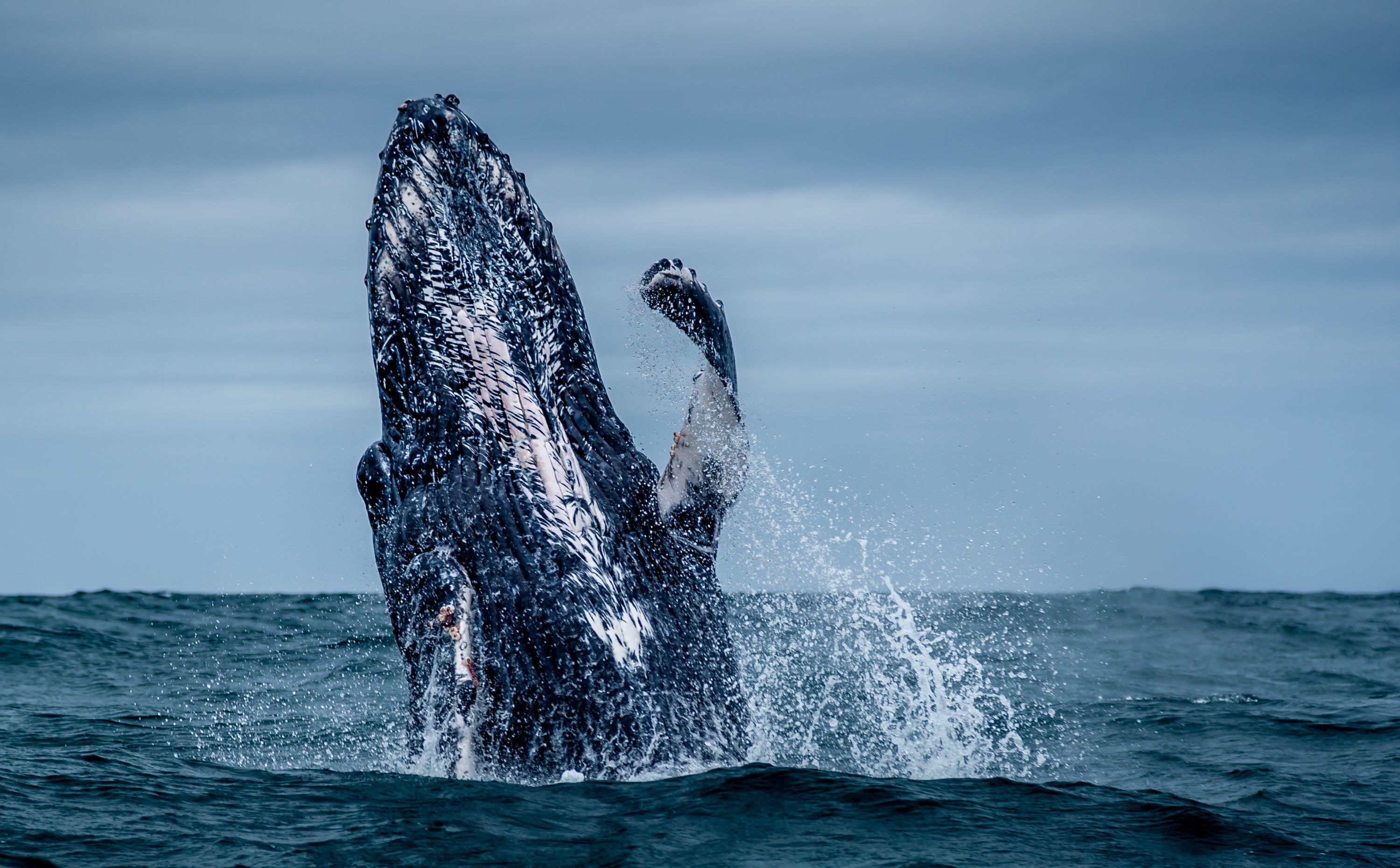 Woman Calls Emergency Services As Whales Swim Near Boat In Dramatic