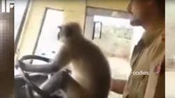 원숭이에게 운전 맡긴 버스운전사의