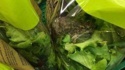 Η απάντηση της ΑΒ Βασιλόπουλος για τη σαλάτα με το βατραχάκι - που
