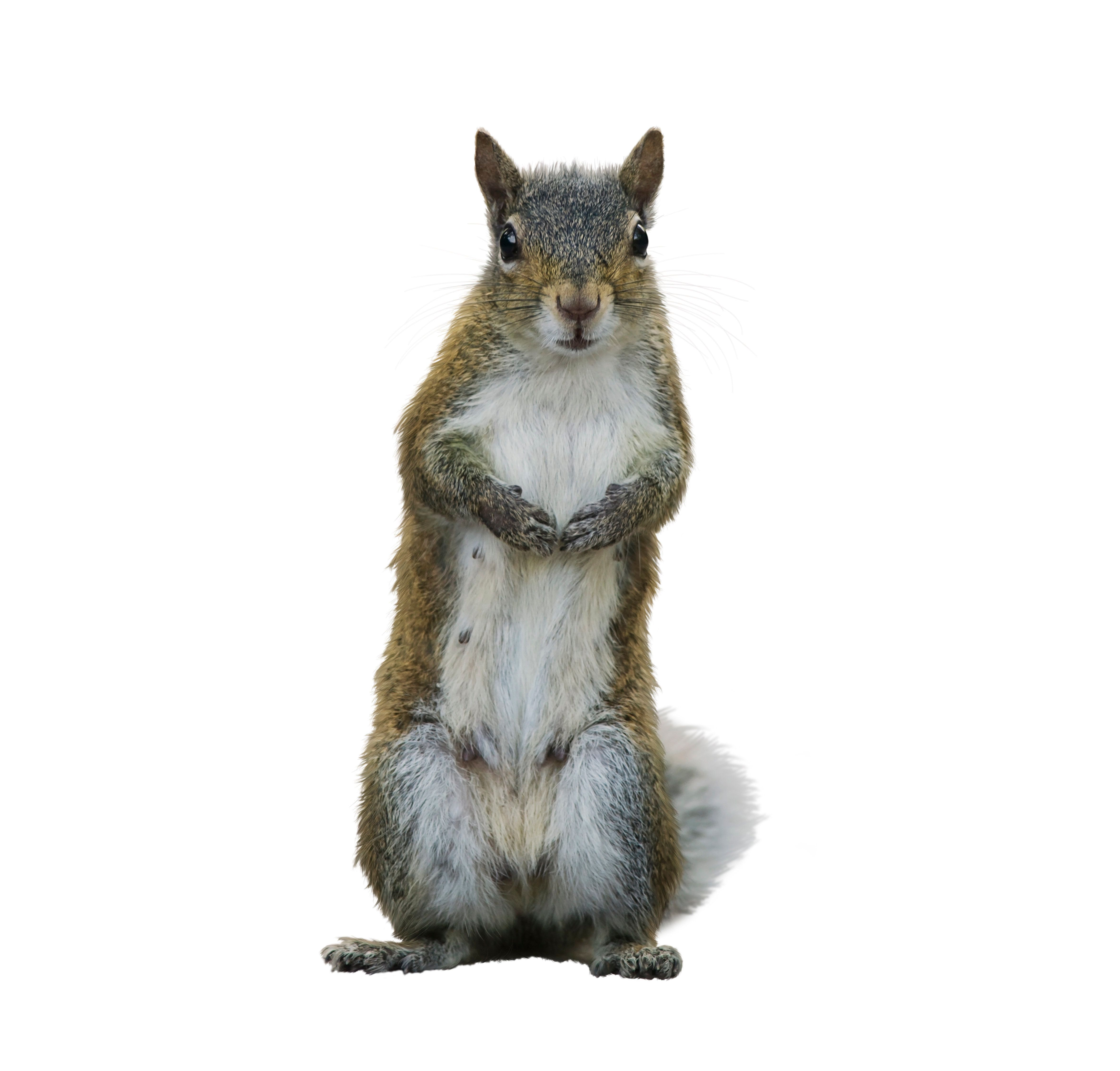 The woman told the airline that she was bringing an emotional support animal but did not indicate that it was a squirrel, acc