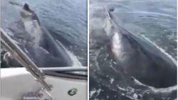 Γυναίκα τρομοκρατήθηκε από μια φάλαινα και έκανε το πιο απίστευτο