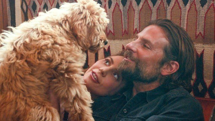The Breakout Star Of 'A Star Is Born' Is Bradley Cooper's Real-Life