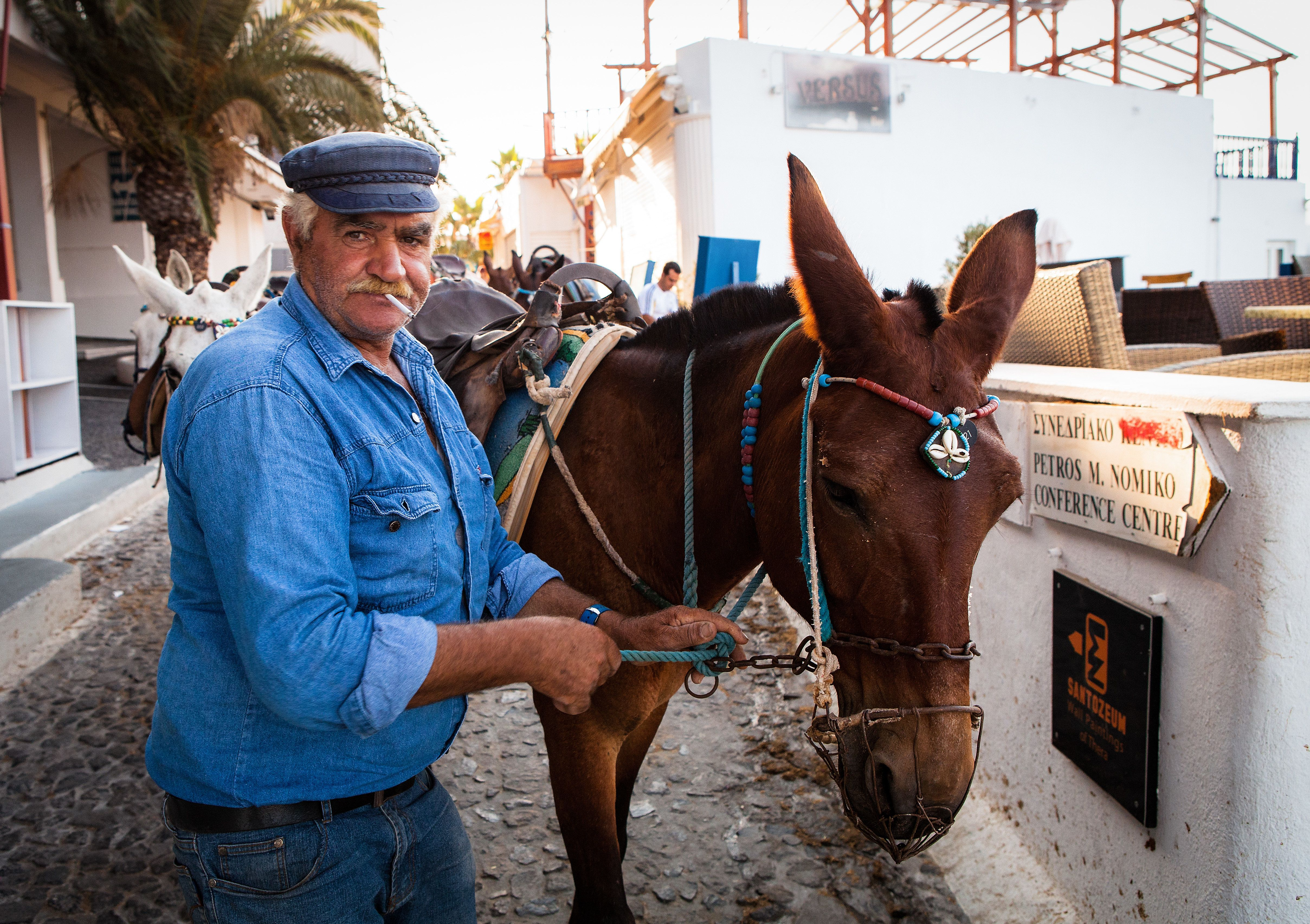 In Greece, banned fat tourists ride a donkey 90