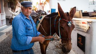 [UNVERIFIED CONTENT] Man with donkey in Fira, Santorini, Greece.