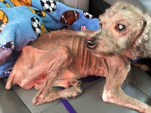 Misshandelter Hund soll eingeschläfert werden – der Wille des Tieres ist