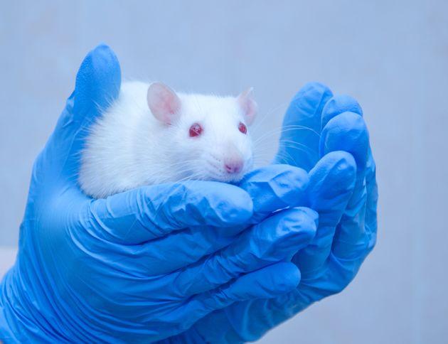 Επιστήμονες δημιούργησαν ποντίκια από γονείς του ίδιου