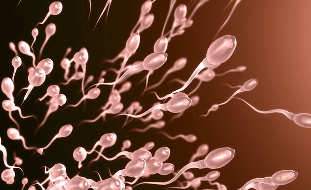 A Shortage of Sperm Donors: The Brexit Dilemma We Didn't See
