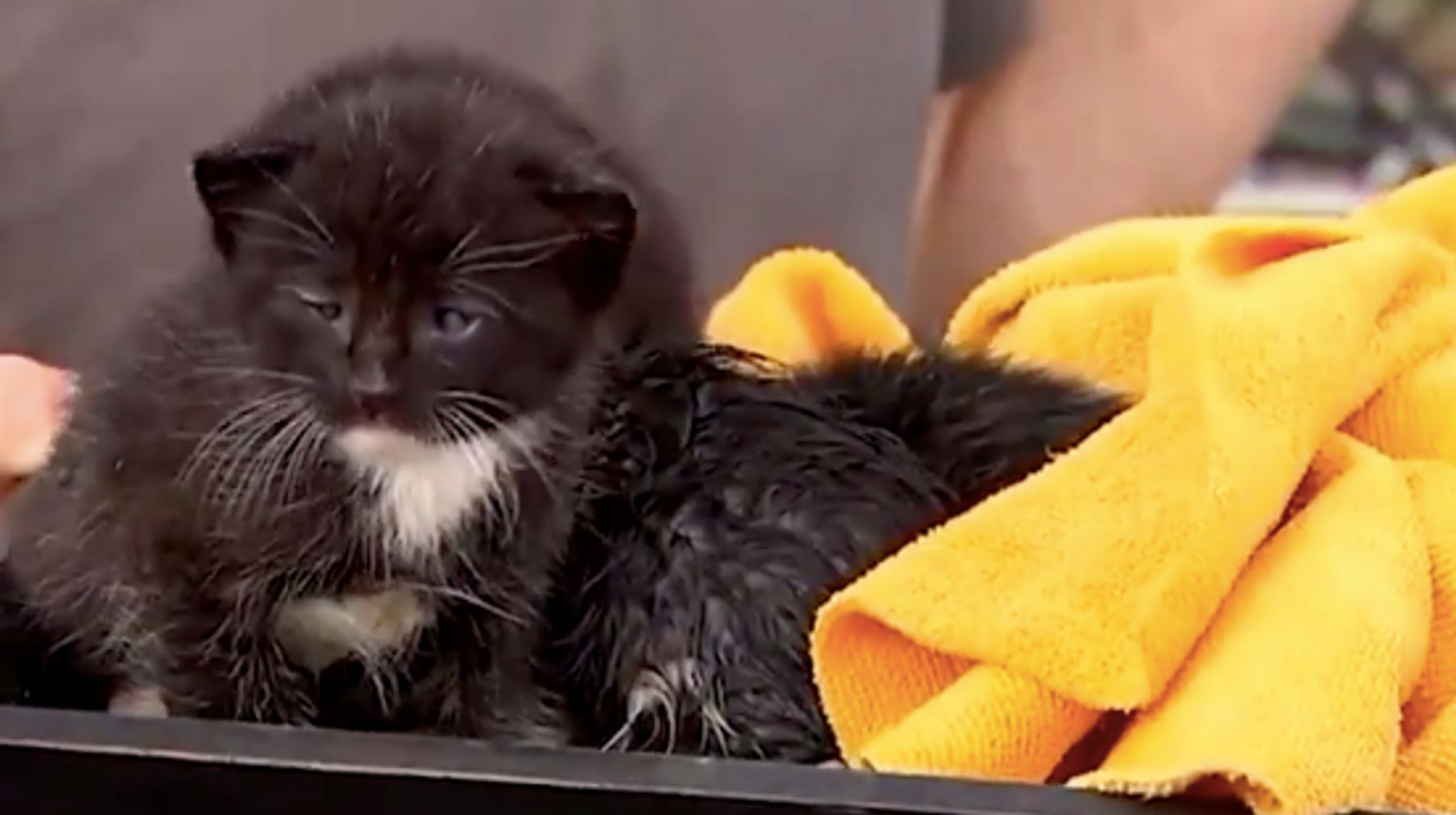 Tiny Kittens Rescued After Falling Through Ceiling During