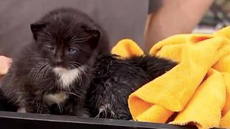 Four tiny kittens were rescued after falling through a collapsing ceiling during Hurricane Michael, thanks in part to ABC News meteorologist Rob Marciano.