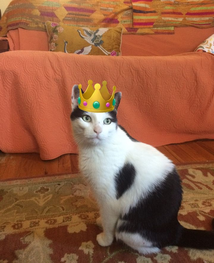 Earnest Raymond the cat is now being treated like the king he is.