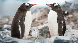 Δυο αρσενικοί πιγκουίνοι γίνονται γονείς και το ίντερνετ δεν μπορεί να το