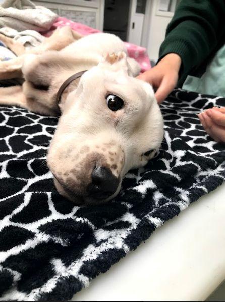 Brite findet abgemagerten Hund: Tierärzte kämpfen um das Leben des