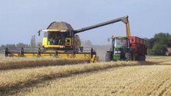 Filières agricoles: nette hausse de la production, un record pour les
