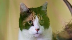 Katze legt sich auf Brust der Besitzerin und rettet ihr so das