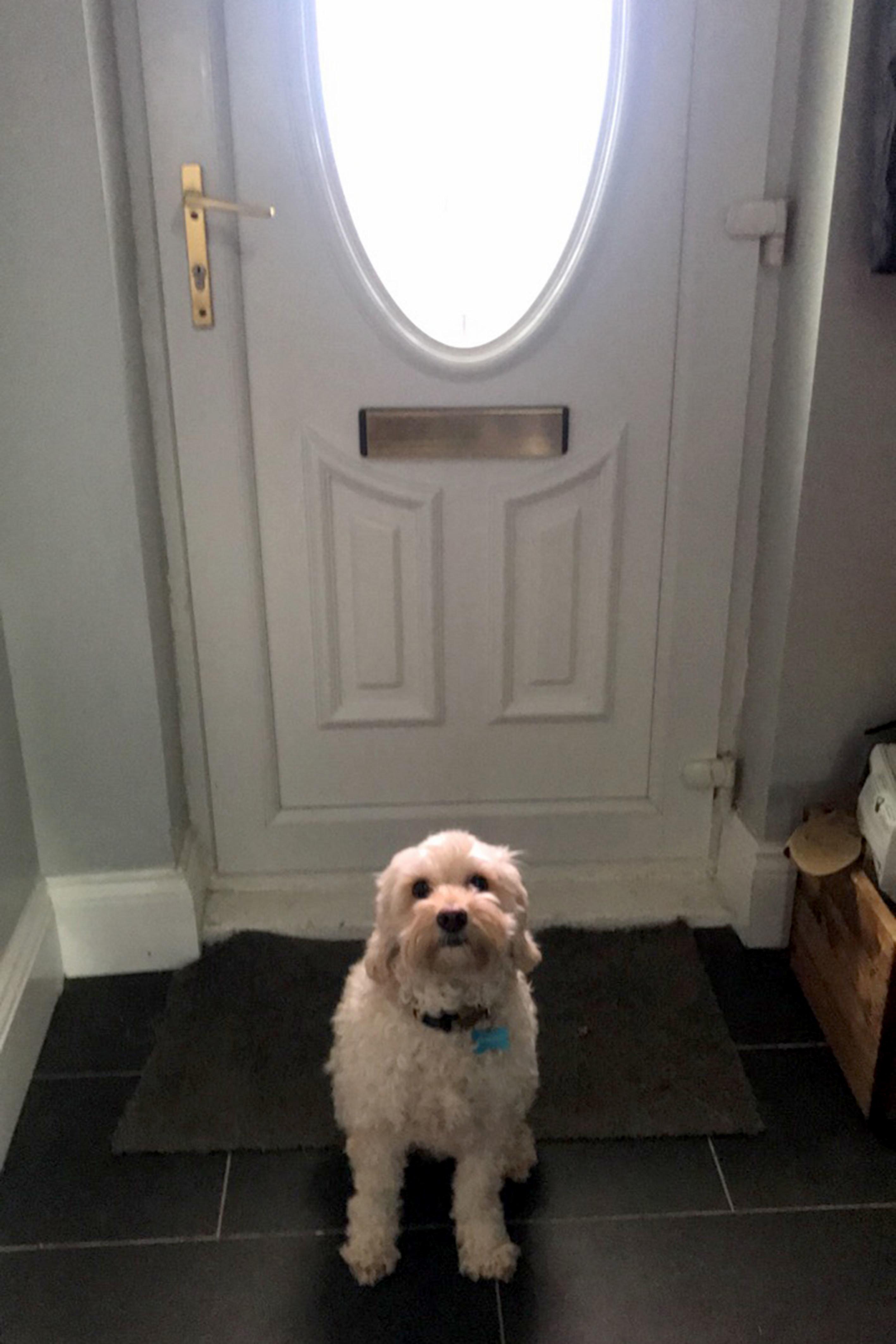 Frau lässt Hund alleine – dann erkennt sie ihre Wohnung nicht