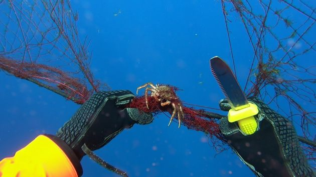 A diver works to free a crab caught in the ghost net recovered off the coast of the Aeolian Islands....