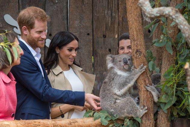 Η Μέγκαν και ο Χάρι στην Αυστραλία: κοάλα, καγκουρώ και baby