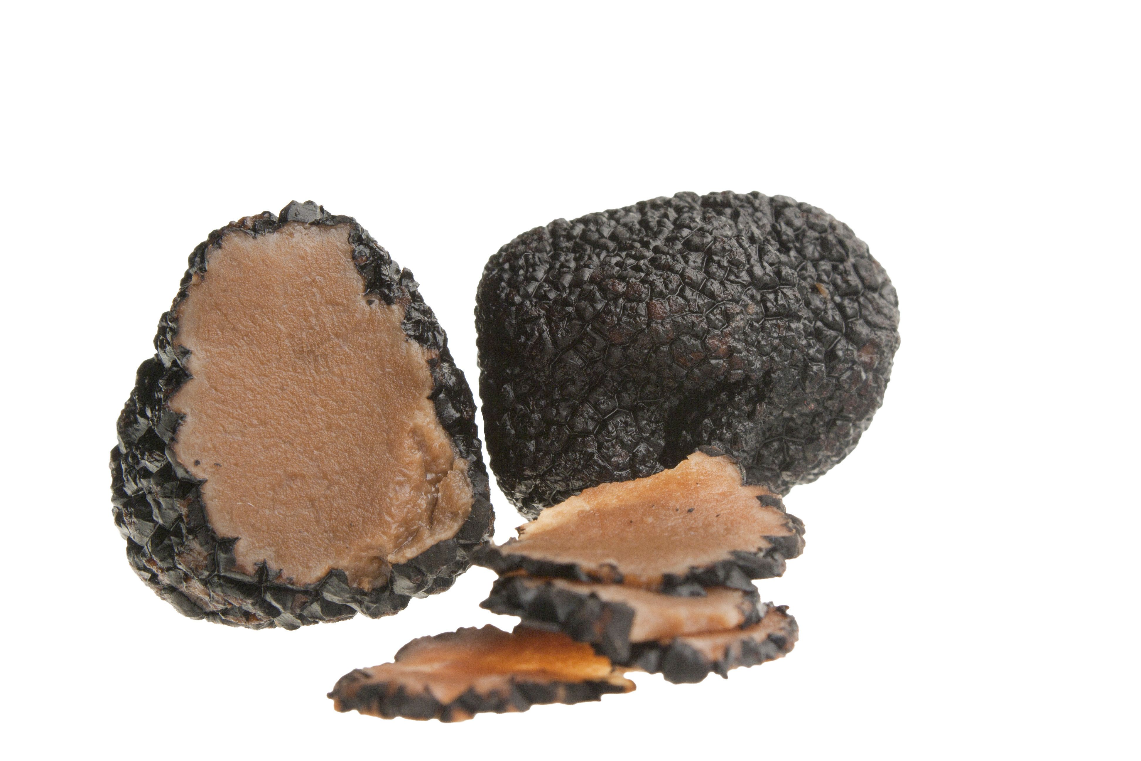 전북 임실서 송로버섯으로 추정되는 버섯이