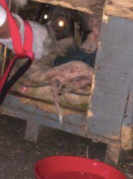 Hund macht Herrchen auf Box aufmerksam – als der reinschaut, fängt Horror