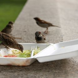 900,000 Edible Meals Are Thrown Away Every Single Day By UK Restaurants And