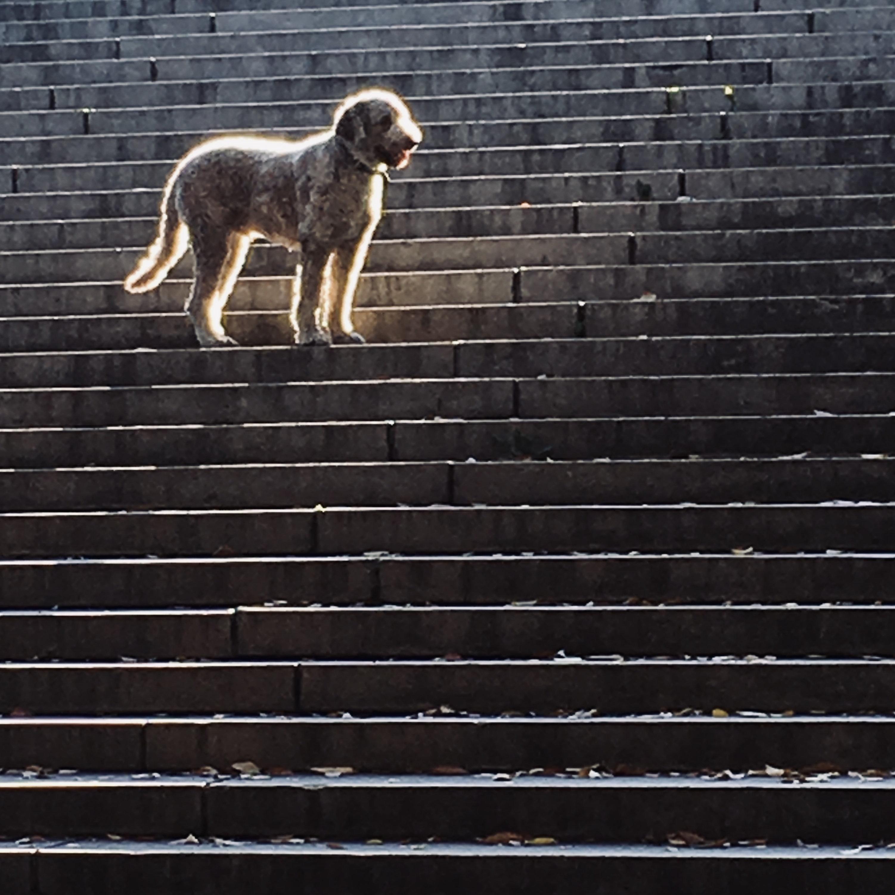 Νέα έρευνα αποδεικνύει πως οι σκύλοι ακολούθησαν τον άνθρωπο από τα πρώτα του βήματα στη