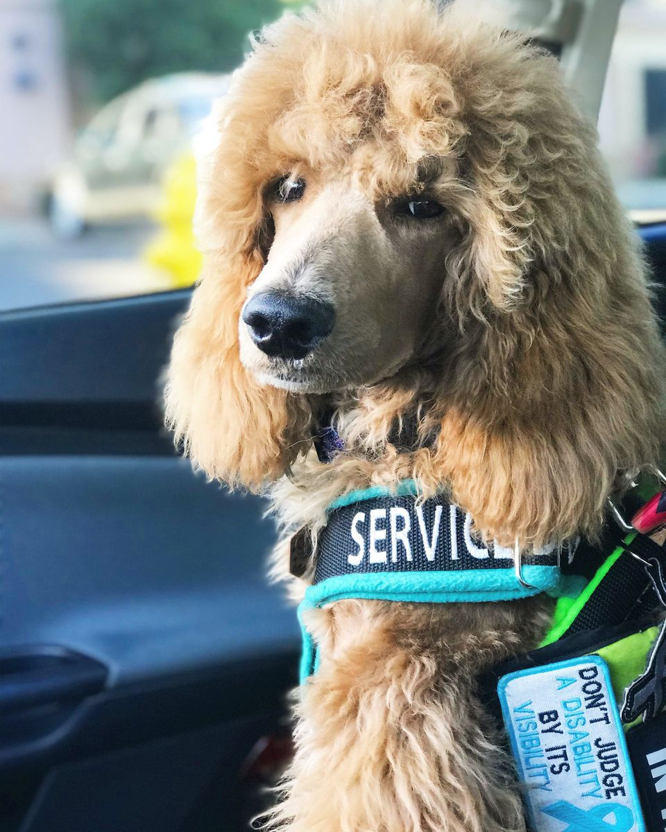 23 Photos That Capture The Bond Between Service Dogs And Their Humans PET-icure Pet Grooming & Supplies Pepperell Massachusetts 01463