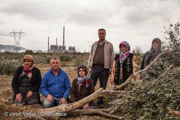 터키의 한 마을에서 주민들이 석탄 발전소 건설을 위해 불법 벌목된 6000여 그루의 나무를 증거로 보여주고
