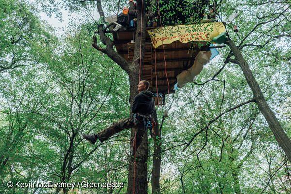 독일 서부 함바흐에서 석탄 채굴을 위해 숲을 파괴하는 독일 전력회사 RWE에 그린피스 활동가가 대항하고