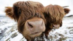 WEATHER: Snow Forecast For Scotland As Winter Finally Extends Its Icy