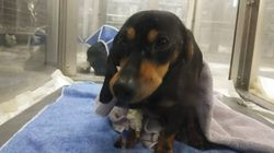 Hund wird brutal misshandelt und überlebt – die Polizei