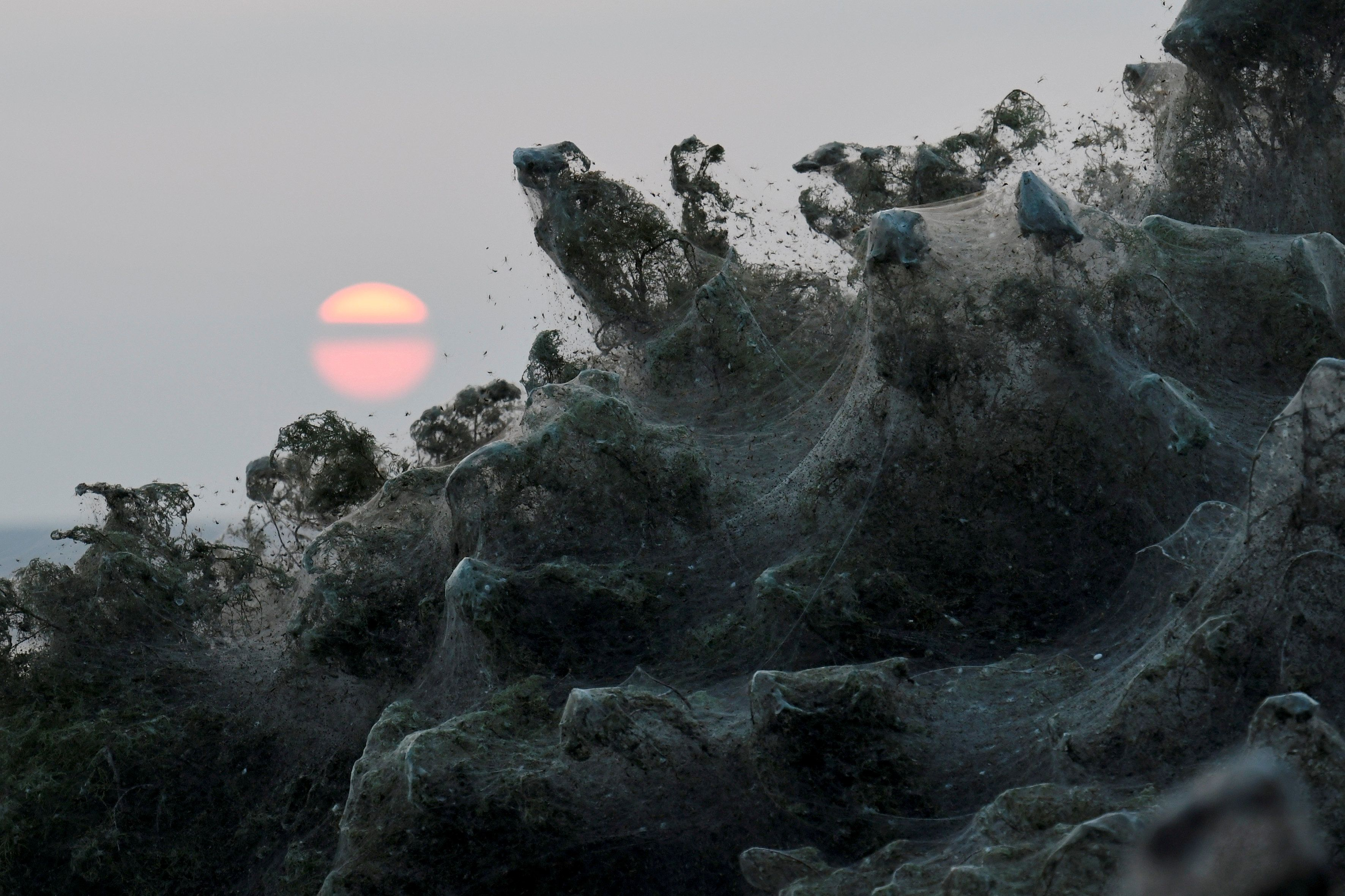 Massive Spider Webs Completely Cover Greek Beach In Surreal
