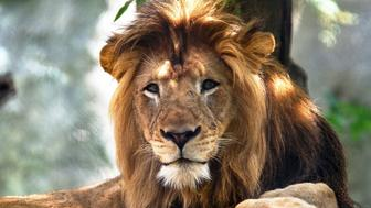 Nyack was killed by long-time mate Zuri at Indianapolis Zoo,