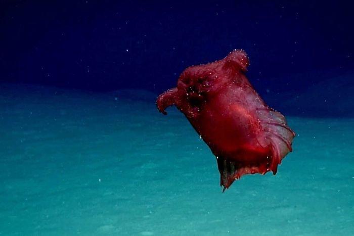 Forscher entdecken Unterwasser-Monster und stehen anfangs vor einem Rätsel