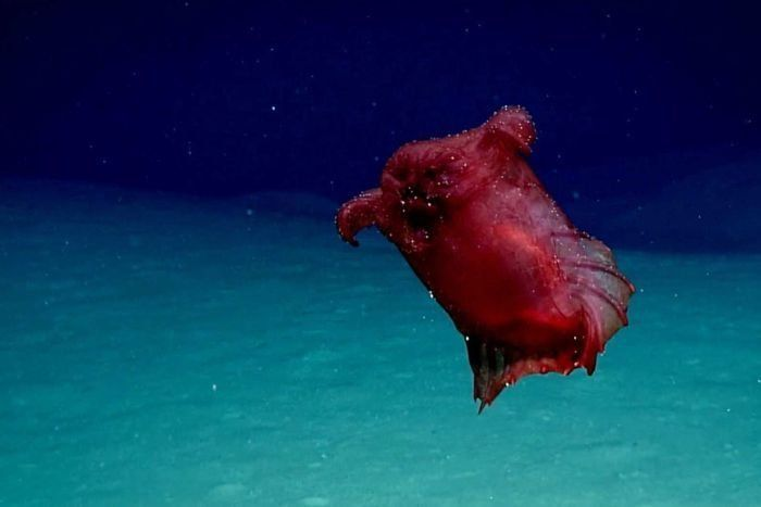Forscher entdecken bizarres Unterwasser-Monster und stehen anfangs vor einem