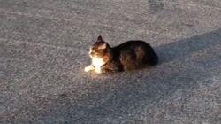 도로를 점유한 고양이를 결계 안에 가둬버린