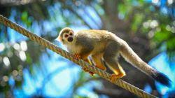 Μαϊμούδες λιθοβόλησαν μέχρι θανάτου άνθρωπο στην