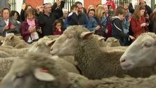 Sheeps In The Streets