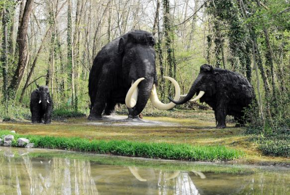 The woolly mammoth were alive during the last ice