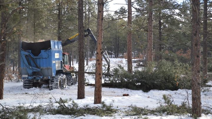 A machine removes trees from Reservoir Hill, a popular city-owned forest near downtown Pagosa Springs, in order to create hea