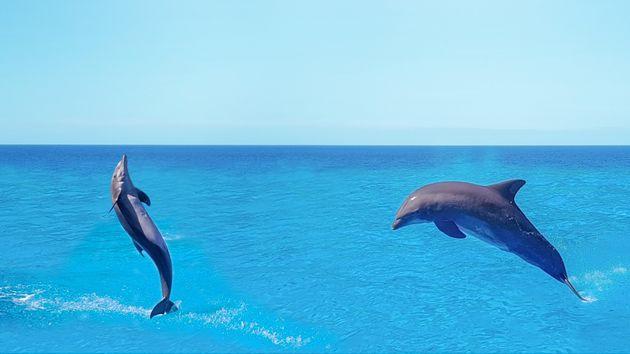 Οι άνθρωποι καταστρέφουν την σεξουαλική ζωή των δελφινιών. Δείτε