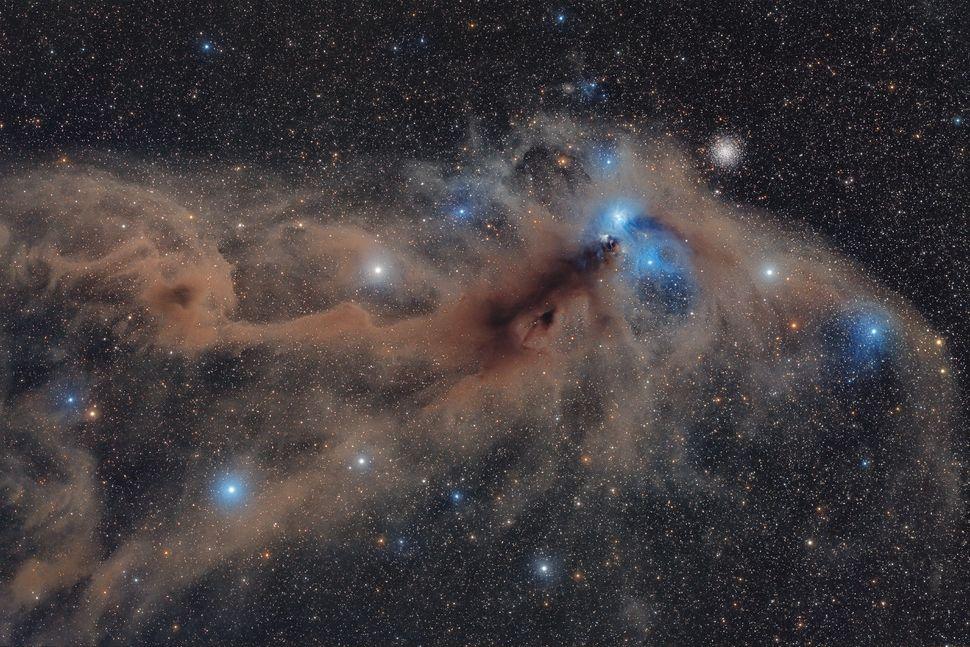 """Corona Australis Dust Complex"""
